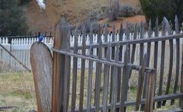 Blå fågel på ett staket arkivfoto