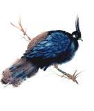 Blå fågelillustration för vattenfärg Arkivbilder