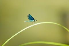 blå felclose upp vatten Royaltyfri Fotografi