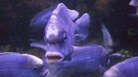 blå fisk royaltyfri fotografi