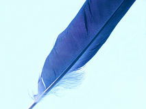 blå fjäder Royaltyfri Bild