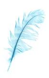 blå fjäder royaltyfria bilder
