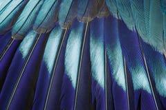 blå fjäder för bakgrund Royaltyfria Bilder