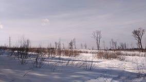 blå fjäder för sky för fältgräsgreen Arkivbilder