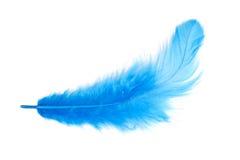 Blå fjäder. isolerat Royaltyfri Fotografi