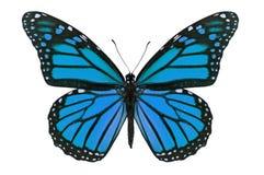 blå fjäril arkivfoto