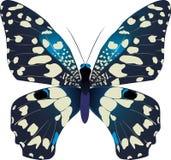 blå fjäril Royaltyfri Fotografi