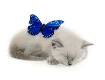 Blå fjäril och kattunge arkivbilder