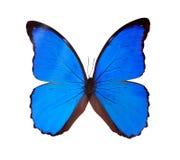 Blå fjäril som isoleras på en vit bakgrund Royaltyfria Bilder