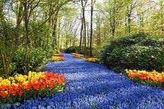 Blå flod AV blommor royaltyfria bilder