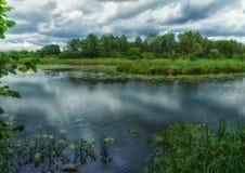 Blå flod för skog Skogsmarkmyr Royaltyfri Foto