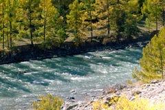 Blå flod i höstskogen på en solig dag Royaltyfri Bild