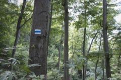 Blå fotvandra fläck på en trädstam i skog Royaltyfri Fotografi