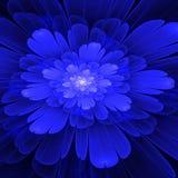 Blå fractalblom med vit i mitt Royaltyfri Bild