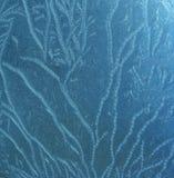blå frostig modell Royaltyfri Bild