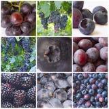blå frukt Royaltyfri Fotografi