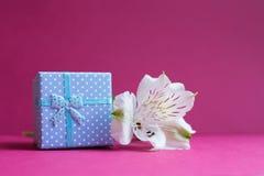 Blå gåvaask med den enkla alstroemeriablomman på karmosinröd backgro Royaltyfri Bild
