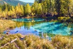 Blå geysersjö som omges av höstskogar i det Altai berget, Sibirien, Ryssland arkivfoton