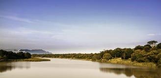 Blå gnu som nyfiket ser på Kruger N fotografering för bildbyråer