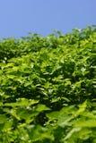 blå green planterar skyen Arkivfoto