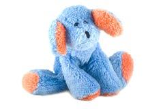 blå gullig vovve Arkivfoto