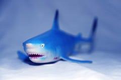 blå haj Arkivbilder