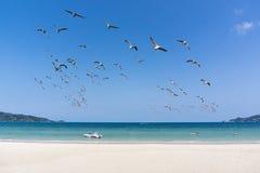 blå havssky för strand Royaltyfria Foton