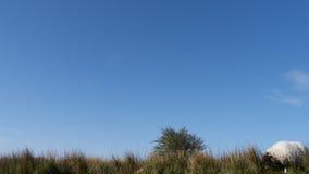 Blå himmel över den Bodmin heden fotografering för bildbyråer
