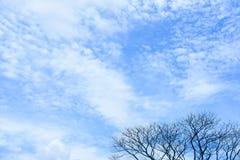 Blå himmel av dagen med det torra trädet för överkant Royaltyfria Foton