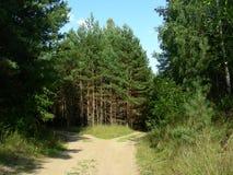 Blå himmel, den täta skogen, barn sörjer på vägrenen Royaltyfria Bilder
