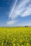 Blå himmel för Canolafält fotografering för bildbyråer