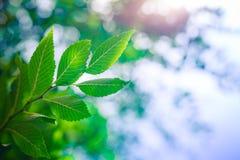Blå himmel för grön bladaganst för naturbaner eller bakgrund arkivbild