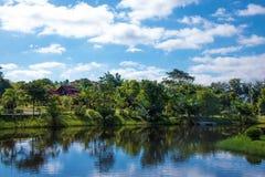 Blå himmel för natur och gräsplanträd Arkivbild