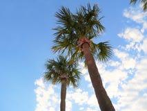 Blå himmel för palmträdpalmträd i molnen Fotografering för Bildbyråer