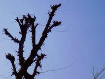 Blå himmel för träd Arkivbild