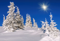 Blå himmel, granar, snö Arkivbilder