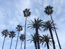 Blå himmel, högväxt träd Royaltyfria Bilder