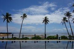 Blå himmel, hav och simbassäng med imponerande kokospalmer royaltyfri fotografi