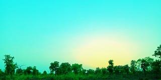 Blå himmel i skogen i foto för aftontidmateriel fotografering för bildbyråer