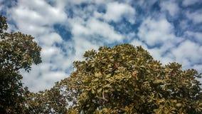 Blå himmel med fluffiga moln och träd Royaltyfria Bilder