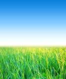 Blå himmel med gräs Royaltyfri Foto