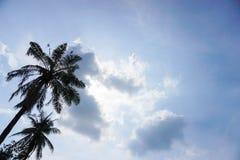 Blå himmel med kokospalmen Royaltyfri Foto