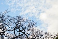Blå himmel med konturn av ett träd arkivfoto
