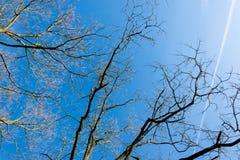 Blå himmel med sammandragningar och filialer på kanten Arkivfoto