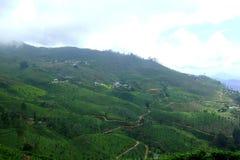 Blå himmel, moln och mist i kullarna, Nuwara Eliya, Sri Lanka Arkivbilder