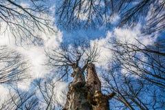 Blå himmel, moln och träd Royaltyfri Foto