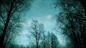 Blå himmel mot en skog arkivbilder