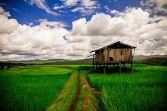 Blå himmel och gräsplanrisfält Arkivbilder