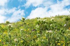 Blå himmel och grönt gräs royaltyfri bild