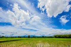 Blå himmel och moln med risfältet under, Thailand Arkivbilder